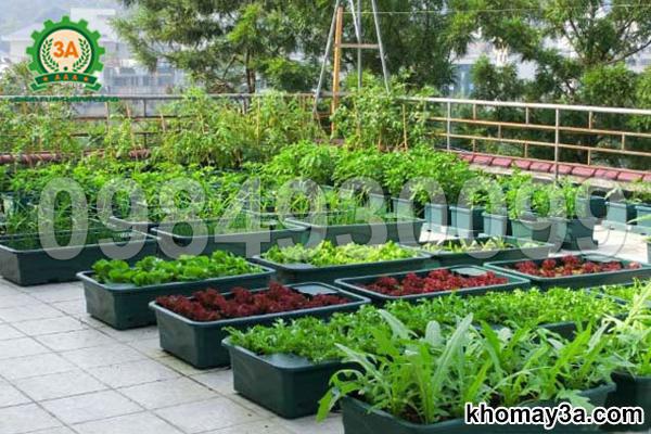 Máy nghiền xơ dừa trồng cây